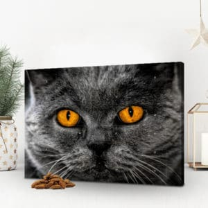 Foto-Adventskalender für Katzen
